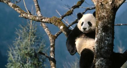 Natural Wonders of Southern China  15 Days